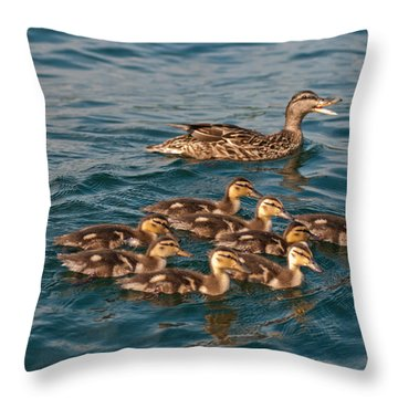 Keeping Them All Inline Throw Pillow