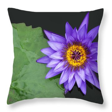 Kenilworth Aquatic Garden Throw Pillow