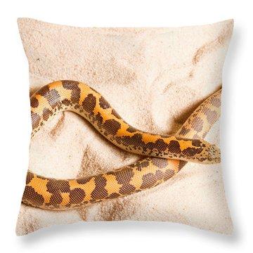 Kenyan Sand Boa Eryx Colubrinus Throw Pillow