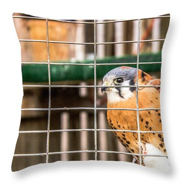 Kestrel And A Headless Mouse Throw Pillow
