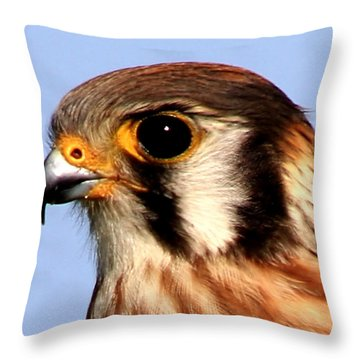 Kestrel Closeup Throw Pillow