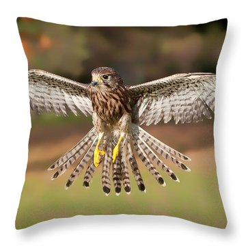 Kestrel Grace Throw Pillow