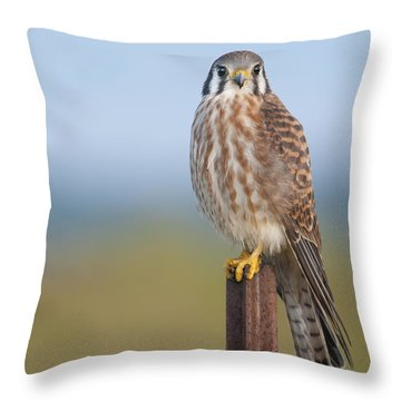 Kestrel On Metal Post Throw Pillow