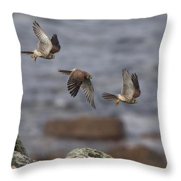 Kestrel Photomontage Throw Pillow