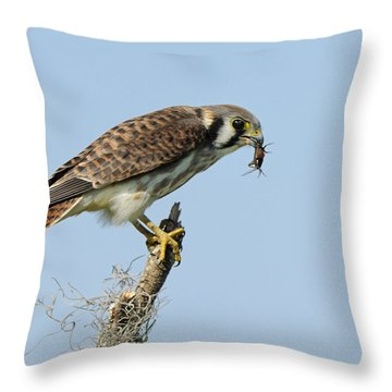 Kestrel With A Cricket Throw Pillow