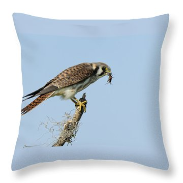 Kestrel With A Cricket Throw Pillow