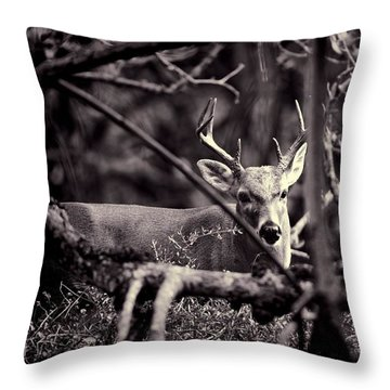 Throw Pillow featuring the photograph Key Deer Sneak Peak by Pamela Blizzard