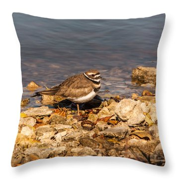 Kildeer On The Rocks Throw Pillow by Robert Frederick