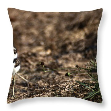 Killdeer Chick Throw Pillow by Skip Willits