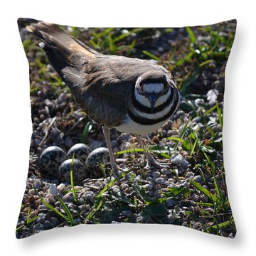 Killdeer Guarding Her Eggs Throw Pillow by Tara Potts