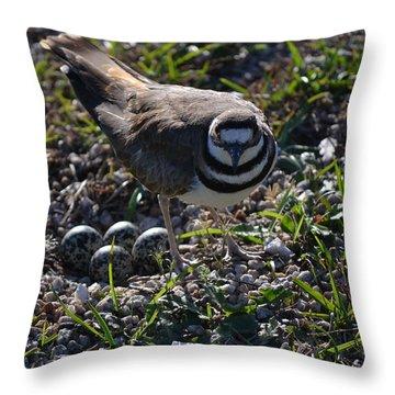 Killdeer Guarding Her Eggs Throw Pillow