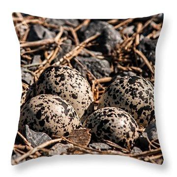 Killdeer Nest Throw Pillow by Lara Ellis