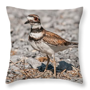 Killdeer Nesting Throw Pillow by Lara Ellis