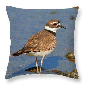 Throw Pillow featuring the photograph Killdeer Wading by Bob and Jan Shriner