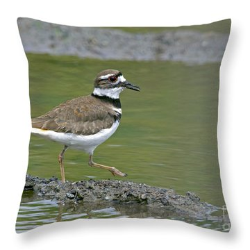 Killdeer Walking Throw Pillow by Sharon Talson