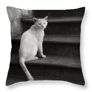 Throw Pillow featuring the photograph Kimba by Laura Melis