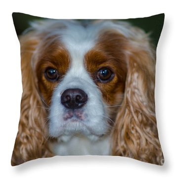 King Charles Throw Pillow