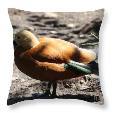King Eider Duck Throw Pillow by John Telfer