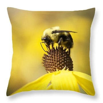 King Of The Coneflower Throw Pillow by Penny Meyers