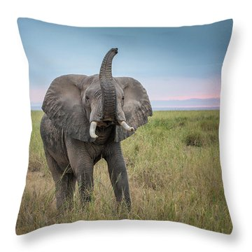 Amboseli Throw Pillows