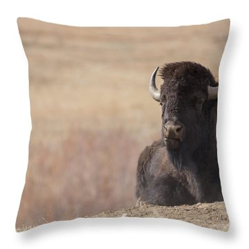 King Of The Hill At Custer State Park South Dakota Throw Pillow