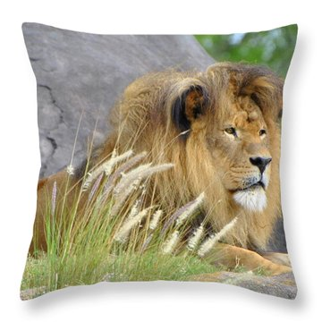 King Of The Jungle Throw Pillow by Jodi Terracina