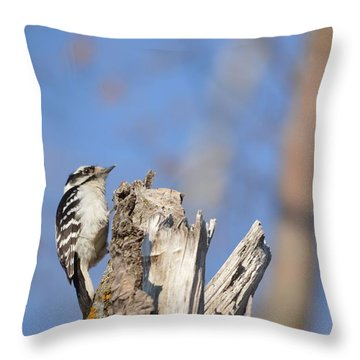 Throw Pillow featuring the photograph King Of The Tree Top by Dacia Doroff