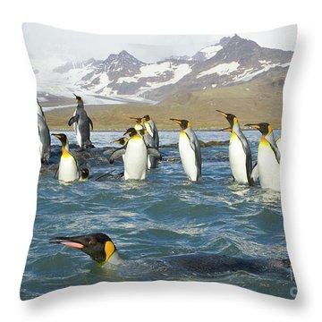 King Penguins Swimming St Andrews Bay Throw Pillow by Yva Momatiuk John Eastcott