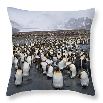 King Penguins Aptenodytes Patagonicus Throw Pillow