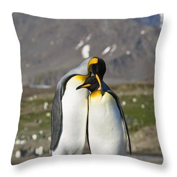 King Penguins Courting St Andrews Bay Throw Pillow