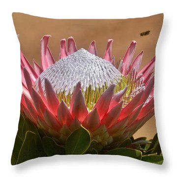King Protea Throw Pillow