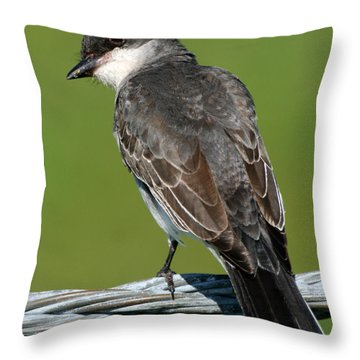 Kingbird On A Wire Throw Pillow