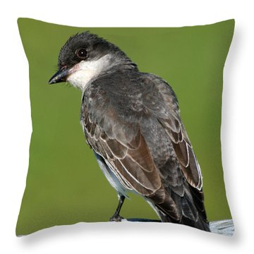 Throw Pillow featuring the photograph Kingbird On A Wire by William Selander