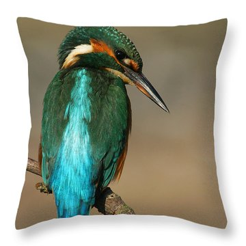 Kingfisher1 Throw Pillow