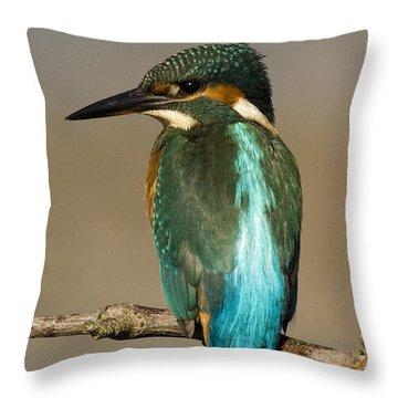 Kingfisher3 Throw Pillow