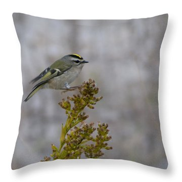 Throw Pillow featuring the photograph Kinglet by Greg Graham