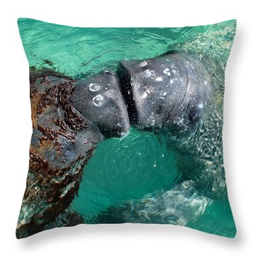 Kissing Manatees Near Harbour Island Throw Pillow