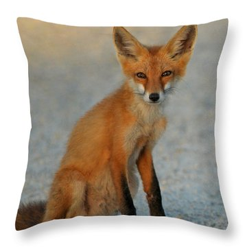 Throw Pillow featuring the photograph Kit by Olivia Hardwicke