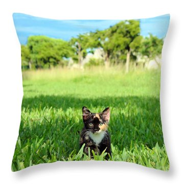 Kitten Throw Pillow by Carsten Reisinger