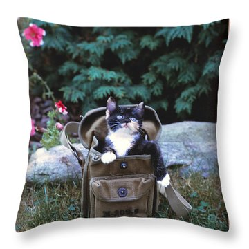Kitten In A Canvas Bag Throw Pillow by Patricia Keller