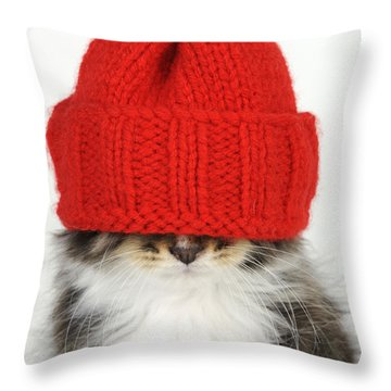 Kitten In A Hat Throw Pillow