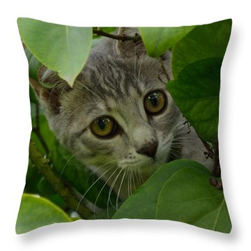 Kitten In The Bushes Throw Pillow by Scott Lyons
