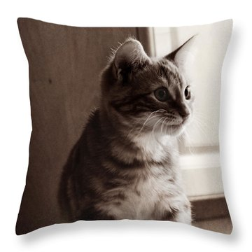 Kitten In The Light Throw Pillow by Melanie Lankford Photography