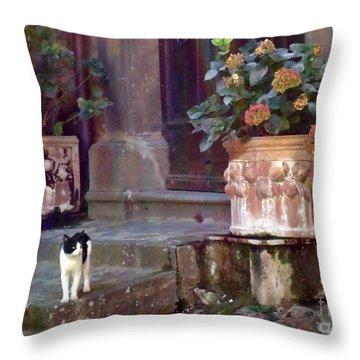 Kitten Italiano Throw Pillow by Barbie Corbett-Newmin