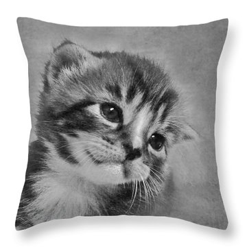 Kitten Just For You Throw Pillow by Terri Waters