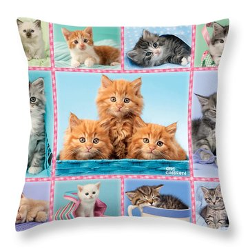 Kittens Gingham Multi-pic Throw Pillow by Greg Cuddiford