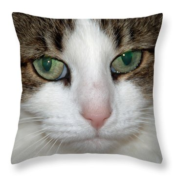 Kitty Throw Pillow by Aimee L Maher Photography and Art Visit ALMGallerydotcom