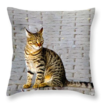 Kitty In Sevastopol Russia Throw Pillow