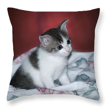Kitty Taking A Moment To Chill Throw Pillow by Thomas Woolworth