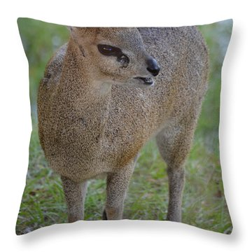 Klipspringer Throw Pillow by Richard Bryce and Family